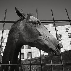 """photo """"Portrait of a horse in city conditions."""""""