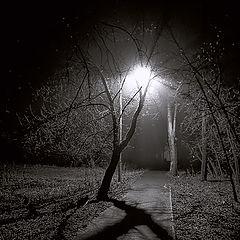 "фото ""Силуэты ночи - 2"""