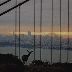 "фото ""deer, Golden Gate and San Francisco at sunrise"""