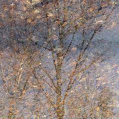 """фото """"когда деревья были большими"""""""