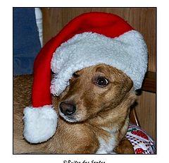 "фото ""My Dog-Noel"""