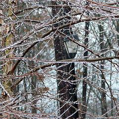 """фото """"Ice Storm"""""""