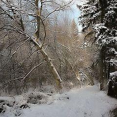 "photo ""Dream Winter Forest"""