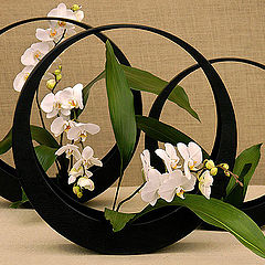 """photo """"Orchids and Circles"""""""