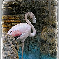 """photo """"Rose flamingo"""""""