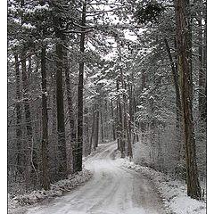 "фото ""Winter Road"""
