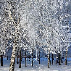 "album ""Winter fairy tale!!!"""