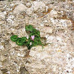 """фото """"Цветок в камне"""""""