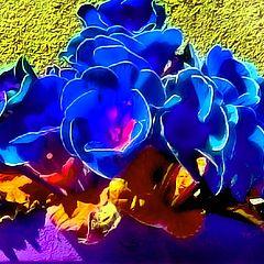 """фото """"Wallflower"""""""