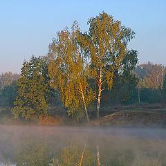 """photo """"Birches"""""""