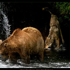 """photo """"For the Bears, For the Wolves"""""""