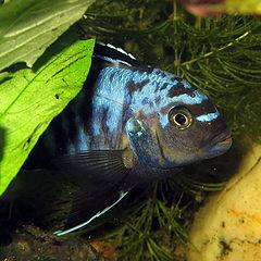 "photo ""Fish"""