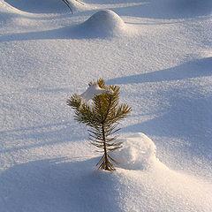 "photo ""Новогодняя"""