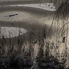 """фото """"серебряная зима"""""""