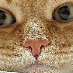 "photo ""Mr. Nose"""