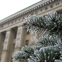 "photo ""Winter. My university."""