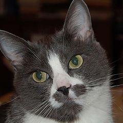 """фото """"Котик"""""""