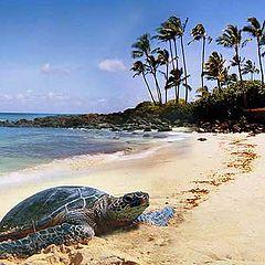 """photo """"Hawaii"""""""