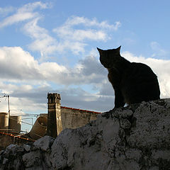 """фото """"Guardian of the Town"""""""