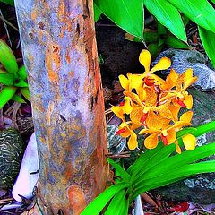 """фото """"Yellow Orchid"""""""