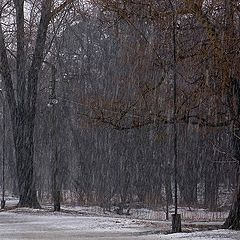 "photo ""Through the snow and rain"""