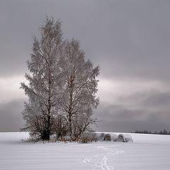 "photo ""Gloomy winter picture"""