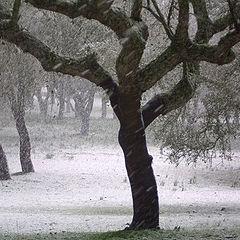 """photo """"let it snow"""""""