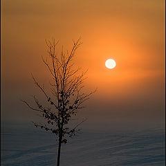 """фото """"Пусть всегда будет солнце"""""""