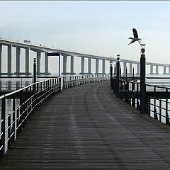 "фото ""A bird's flight"""