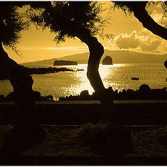 "фото ""The dancing trees"""