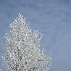 """фото """"Морозное утро"""""""