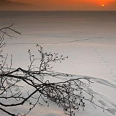 """фото """"И первый солнца луч"""""""