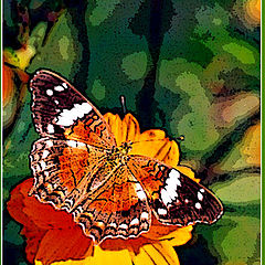 "photo ""Painting of a butterfly"""