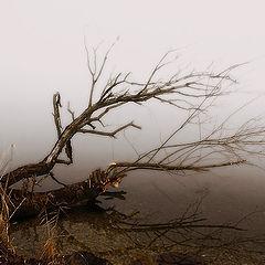 "photo ""Natural Ikebana"""