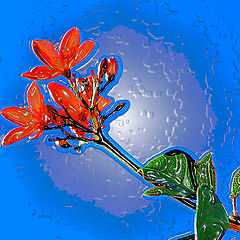 "фото ""Almond Flower"""
