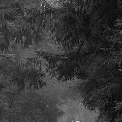 "фото ""В сумраке леса"""