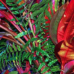 """фото """"Blood in the Jungle"""""""