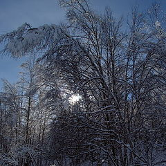"photo ""Winter, winter"""