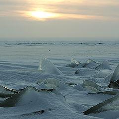 """фото """"ледяные акулы"""""""