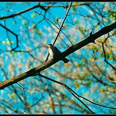 """photo """"in spring"""""""