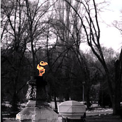 "photo ""Eternal flame"""