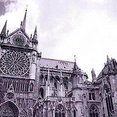 "photo ""Blossoming Paris"""