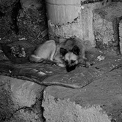 """фото """"Собачья жизнь."""""""