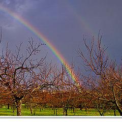 "photo ""Rainbow."""