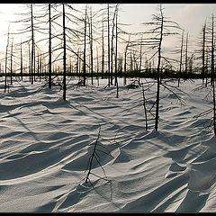 "photo ""По следам ветра / Following the Tracks of the Wind"""