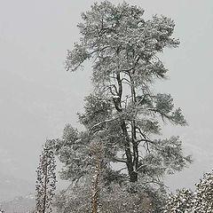 "photo """" Desert Tree in the storm ""."""