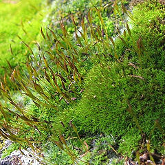"""фото """"Micro forest"""""""