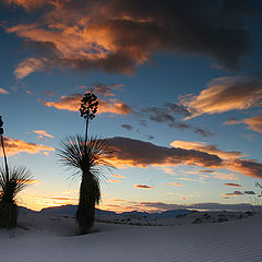 "photo ""Desert Silhouettes"""