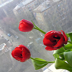 "photo ""Greetings, spring!"""
