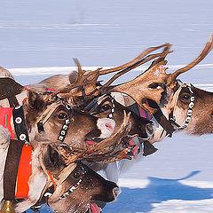 "фотоальбом ""Reindeers"""